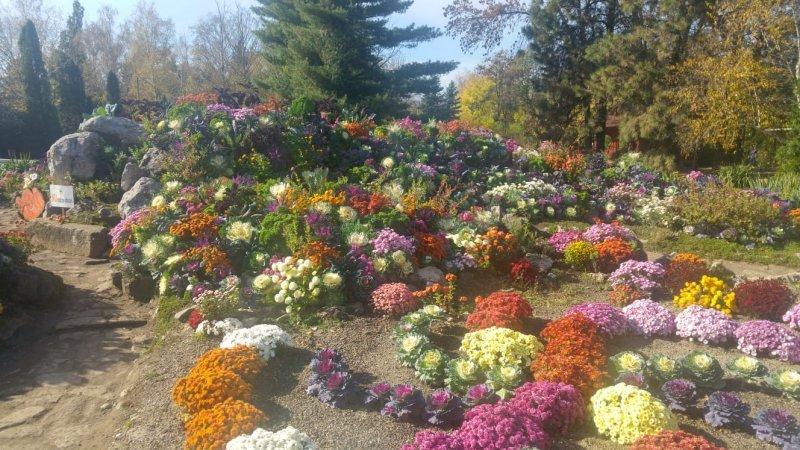 Expoziția Flori De Toamnă în Grădina Botanică Iii