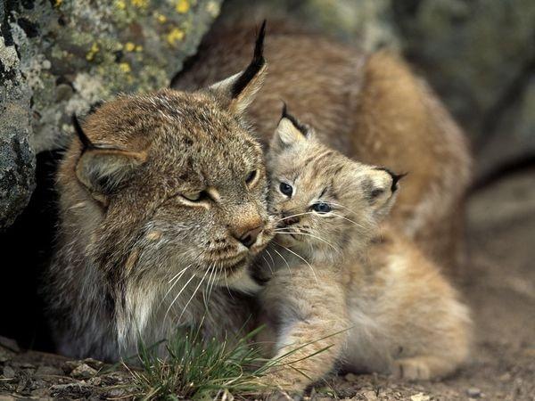 Lista Animalelor Rare Care Ar Putea Să Dispară şi Din ţara