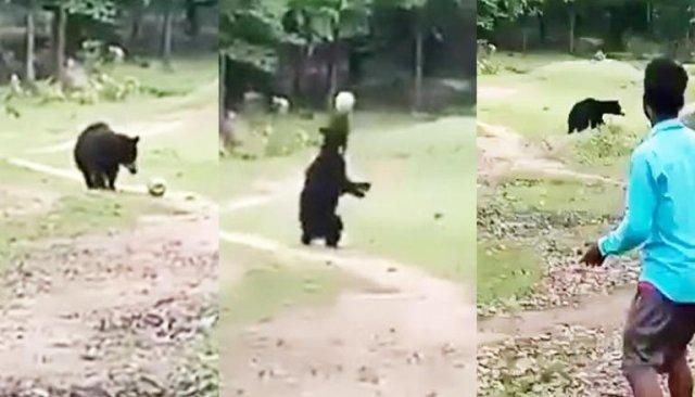 VIDEO O ursoaică și puiul ei au furat mingea de la un meci de fotbal ca să se joace