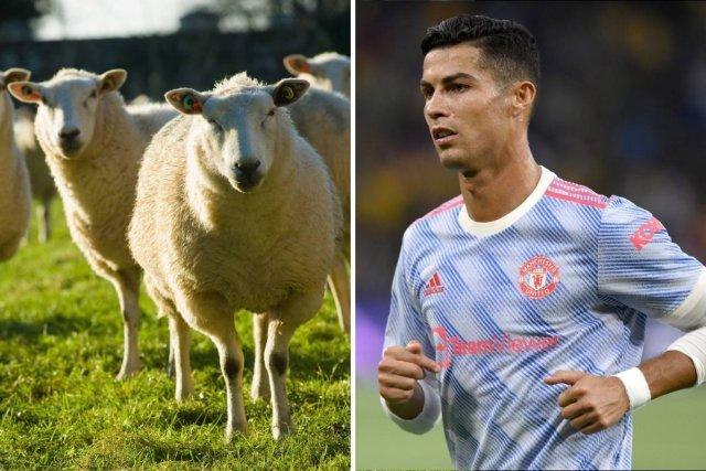 Ronaldo s-a mutat din conacul de 7.000.000 euro fiindcă îl deranja behăitul unor oi
