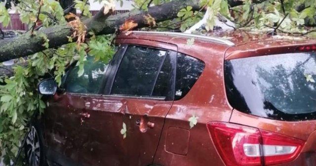 Proces pentru maşina pe care a căzut un copac în timpul furtunii: argumente pro şi contra