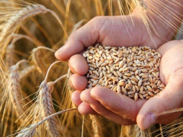 Ministerul Agriculturii: Congo vrea să importe cantităţi mari de cereale din România
