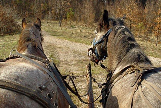 Maşină avariată de căruţă. Judecătorii nu l-au găsit vinovat pe căruțaș. Vor să afle cine a speriat caii