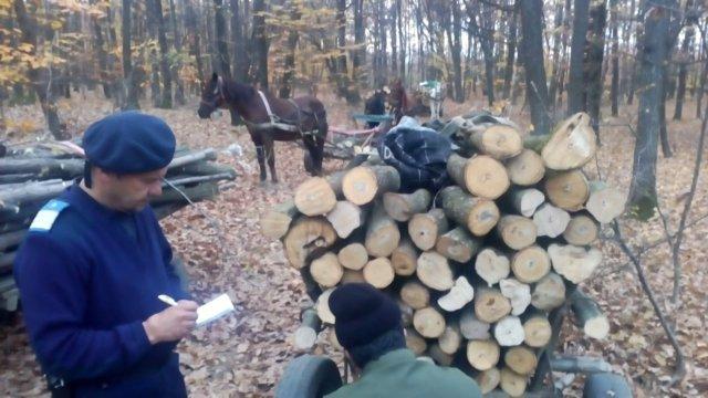 Opt hoţi de lemne surprinşi în fapt. Le cărau cu căruța prin județ