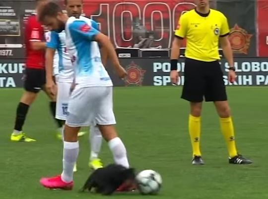VIDEO: Un câine a intrat pe terenul de fotbal şi a dat mingea printre picioarele unui fotbalist