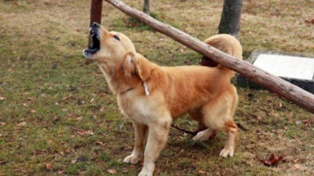 Bătrân amendat deoarece câinii lui lătrau tot timpul