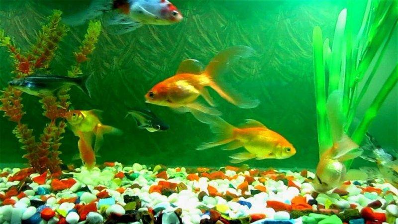 datând un acvariu viteza datând whitby