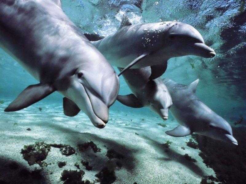 delfinul și viziunea umană