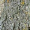 Muşcat de şarpe în timpul unei plimbări printr-o pădure din apropierea Iaşului