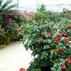 Cadoul de Ziua Femeii: Doamnele şi domnişoarele pot vizita gratuit Grădina Botanică