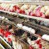 Românii cumpără în jur de 180 de milioane de ouă înaintea Paştelui
