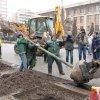 FOTO În sfârșit se plantează tei. Primul, în fața Școlii Gh. Asachi, cu lopeți de la Chirica