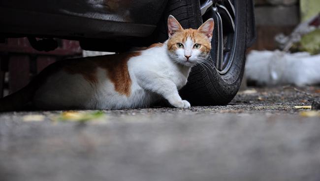 Top 10 motive pentru care pisica ta pierde în greutate